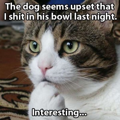 The dog seems upset - the thought of a cat