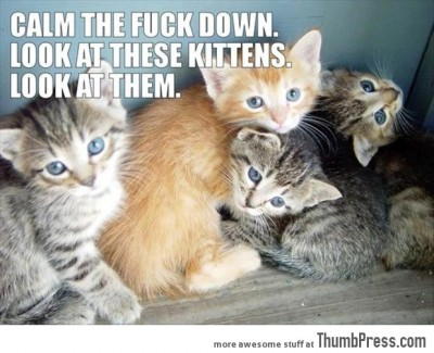 Look at These Kittens and Calm Down - Funny Pictures