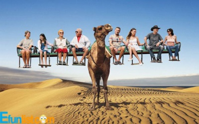 People Siting on Funny Camel