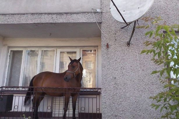 Horse-On-The-Balcony