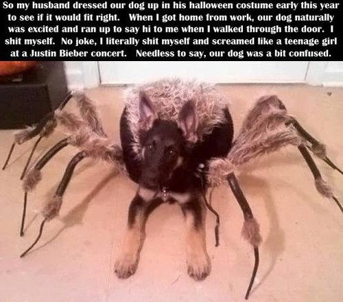 Funny Halloween Story About Scary Dog