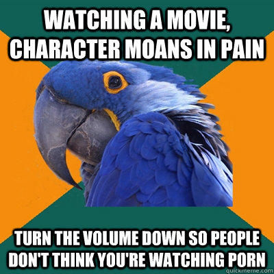 Paranoid Parrot Funny Pictures About The Reason For Turning Down The Volume