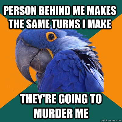 Paranoid Parrot Funny Pictures About Person Behind
