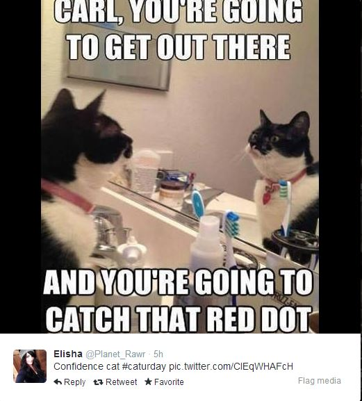 cat-confidence-about-catching-red-dot