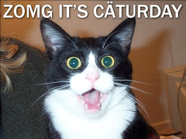 its-caturday-2014