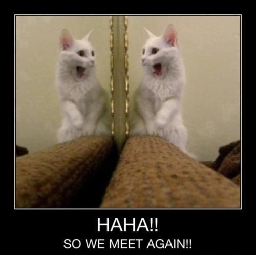 Cat Jokes About Mirror Reflection